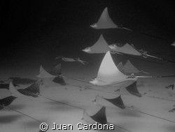 Cancun Dive by Juan Cardona