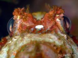 Scorpionfish eyes by Paz Maria De Vera-Santos