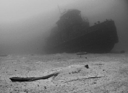 A stingray contemplating the wreck of the Beata in Tortola. by Juan Torres