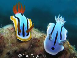 2 in 1, different color by Jun Tagama