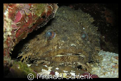 Toadfish of Roatan.  Kinda looks like an old girlfriend o... by Michael Schlenk