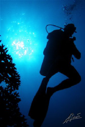 """even a diver against a sunburst looks much much """"cooler""""... by Adriano Trapani"""