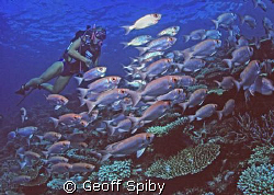 my wife Lyn posing with a school of bigeyes by Geoff Spiby