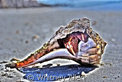 Found this lil guy while snorkeling around some mission r... by Whitney Allen
