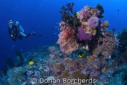 Diver at Peter's Patch by Dorian Borcherds