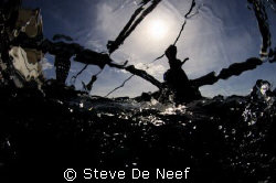 Taken during surfacing after a dive on the beautifull apo... by Steve De Neef
