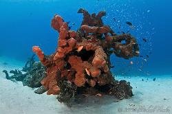 Spong reef by Michael Henke