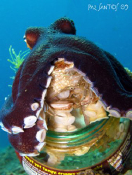 "I saw this octopus leave his comfy ""house"", grab a crab, ... by Paz Maria De Vera-Santos"