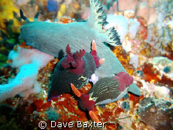 naughty nudis doing it whilst another is watching on !!!! by Dave Baxter