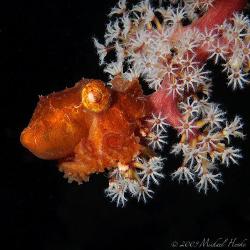 Sleeping Octopus by Michael Henke