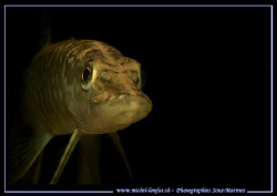 Face to face with this beautiful young Pike Fish in one o... by Michel Lonfat