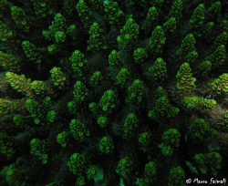 ..flying on coral forest ....