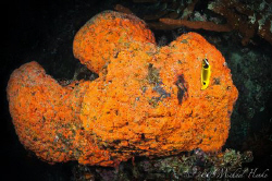 Big fish or sponge? by Michael Henke