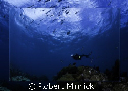 Diving Key Largo by Robert Minnick