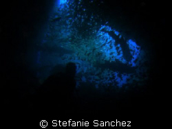 Exit of Fish-Rock Cave. Diver silouette with sharks in ba... by Stefanie Sanchez