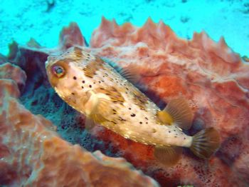 Trunk fish in cozumel / SONY DSCP10 by Yannick Abel-Coindoz