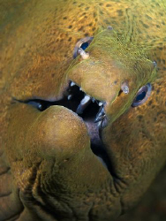 """""""Face to Face"""" This moray was very interested in my camer... by Henry Jager"""