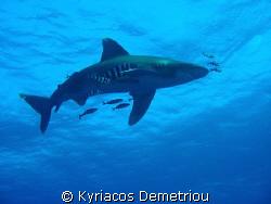 White tip shark.Taken with a nikon slr digital 7900 in a ... by Kyriacos Demetriou