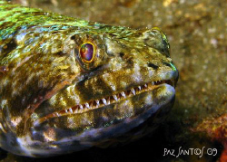 "A variegated lizardfish saying ""cheese"" by Paz Maria De Vera-Santos"