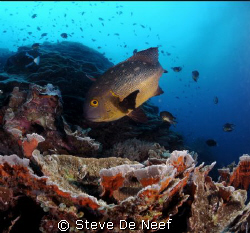 This one came to say hi by Steve De Neef