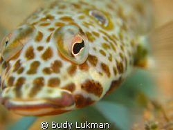 Eye of lizard fish, don't know exactly the type of the fi... by Budy Lukman