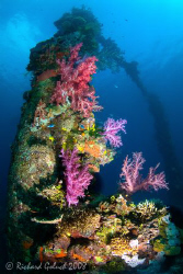 Sankisan Maru-coral on the mast-Chuuk Lagoon by Richard Goluch
