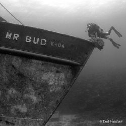 """My Bud & Mr Bud""  My first experience of underwater phot... by Debi Henshaw"