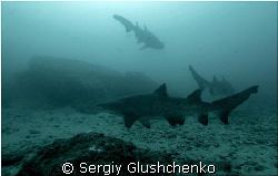 Sharks sliping by Sergiy Glushchenko