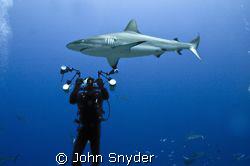 Shark Filming in Chuuk by John Snyder