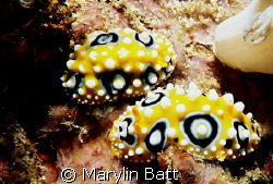 Bullseye nudi's Atlantis Resort  Nikonos V 1:2 Macro framer by Marylin Batt