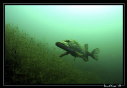 """King """"PIKE"""" in his small pond. What a great place. I just... by Daniel Strub"""