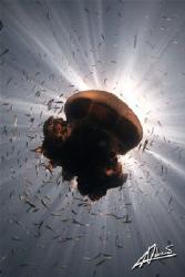 I love jelly fish! by Adriano Trapani