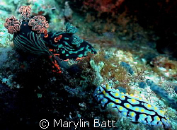 Two very different and beautiful Nudis on the same spot.... by Marylin Batt