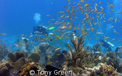 Diving on  coral gardens twatching my dive buddy check hi... by Tony Green