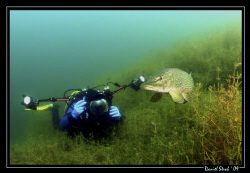 The Pike and the UW-Photographer :-) what a great moment,... by Daniel Strub