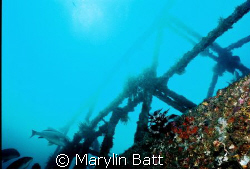 Wreck of the Almajane off Atlantis resort. Nikonos V 20mm... by Marylin Batt