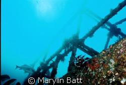 Wreck of the Almajane off Atlantis resort. Nikonos V 20mm... by Marylin Batt