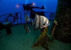 An underwaterphotographer taking a picture of Atlantic Sp... by Juan Torres