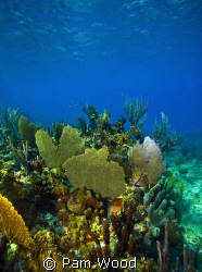 The beautiful Coral Sea Garden in Bimini, Bahamas. by Pam Wood