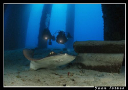 My friends Evelio and Eduardo behind a stingray. by Juan Torres