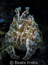 Cuttlefish, taken at Wakatobi with Canon S70 by Beate Krebs
