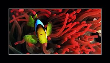 There is always something new underwater, but being used ... by Johannes Felten