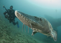 Sturgeon. Capernwray. D200, 10.5mm. by Derek Haslam