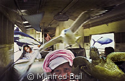 Borneo, in the train from Tenom to Beauford i had a dream... by Manfred Bail