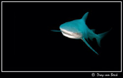 Bull Shark, Zambezi. by Dray Van Beeck