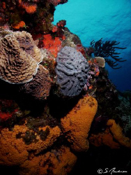 This image was taken in 2008 while diving in Cozumel. The... by Steven Anderson
