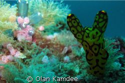 I dived 36 metres depth at East of Eden, The eastern side... by Olan Kamdee
