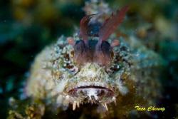 Scorpionfish @ Anilao by Taco Cheung