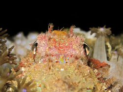 looking from the tail towards the eyes of a scorpion fish... by Andrew Macleod