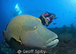 Lyn, the diveboat and Bono the Napoleon wrasse by Geoff Spiby
